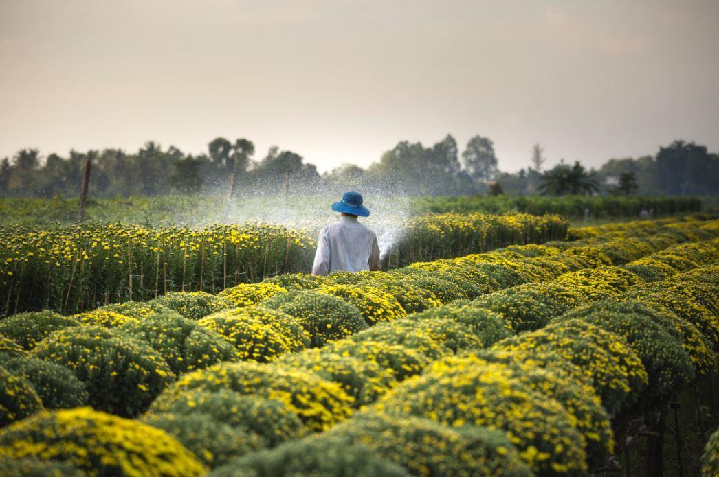 Read more about the article Schädlingsbekämpfung in der Landwirtschaft – Nicht immer ist alles öko, was ökologisch ist