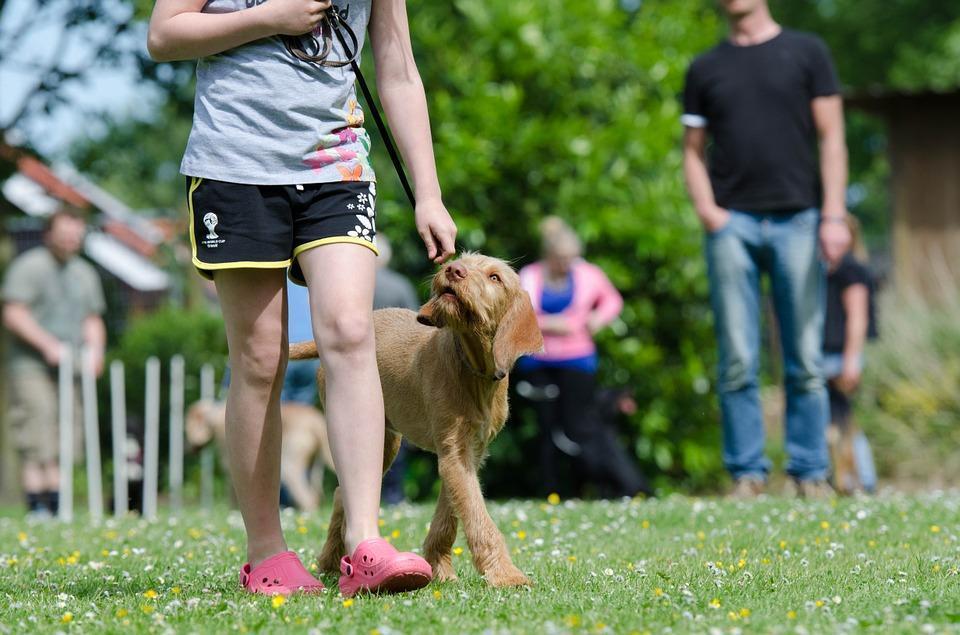 Hund beim Training in Hundeschule Vier Pfoten