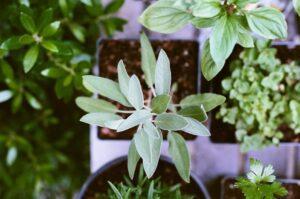 Read more about the article Der Raum, den alle Pflanzen lieben
