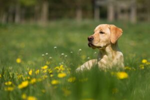 Read more about the article Hundeschule Vier Pfoten